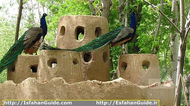 esfahan-bird-garden_45